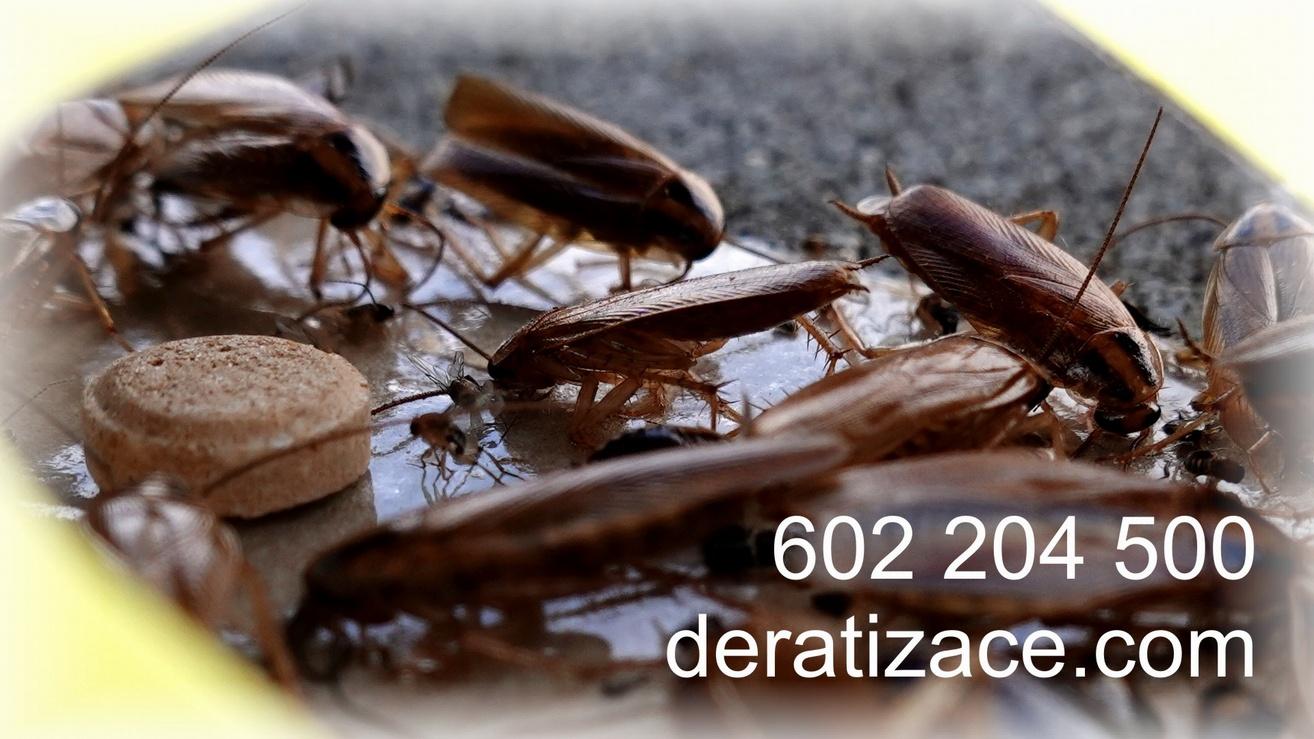 Jak vyhubyt šváby - jak se zbavit švábů