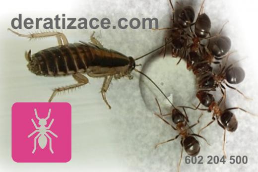 Hubení a likvidace mravenců Praha cena